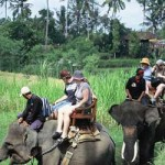 Elephant Safari Riding