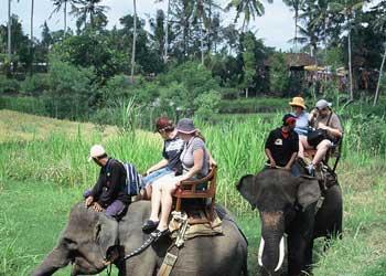 Wisata naik gajah / elephant riding di Bali