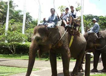 Wisata naik gajah di Bakas Bali