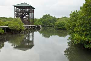 Kawasan hutan Mangrove di Bali