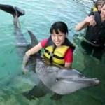 Wisata lumba-lumba di Bali Dolphin Lodge