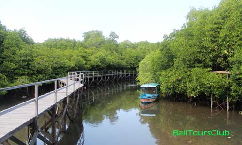 Wisata Hutan Bakau Mangrove Information Center Di Bali