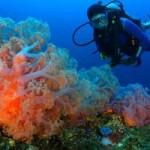 Menyelam – diving di Bali