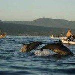 Tiket Nonton Dolphin di Lovina