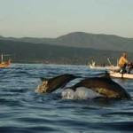 Lumba-lumba / dolphin di pantai Lovina Bali