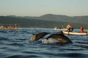 Lumba-luba / dolphin di pantai Lovina Bali