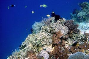 Diving di Pulau Menjangan Bali