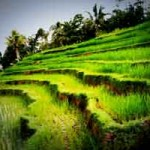 Wisata Subak di Bali