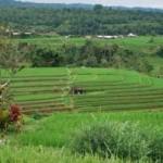 Panorama Alam Pedesaan Bali
