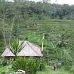 Hamparan persawahan di Bali