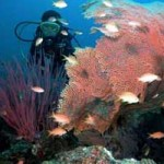 Eksotisme alam Taman laut Pulau Menjangan