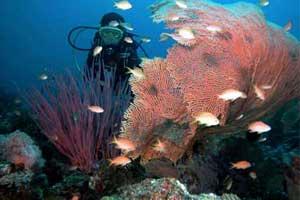 Pemandangan bawah laut di Pulau Menjangan
