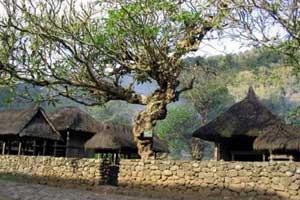 Desa Bali Aga - Tenganan