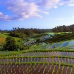 Tour Sehari Penuh di Bali