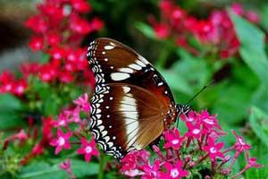 Butterfly park di Tabanan bali