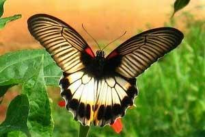 TamanKupu-kupu- di Tabanan