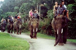 Elephant safari Bali
