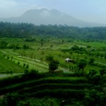 Pemandangan persawahan di Tirtagangga