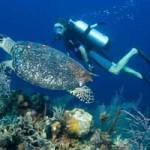 Diving di Amed Bali – Menyelam di surga bawah laut