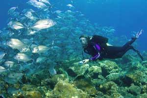 Wisata menyelam di Tulamben